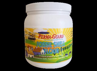 Fossil Shell Flour Jar